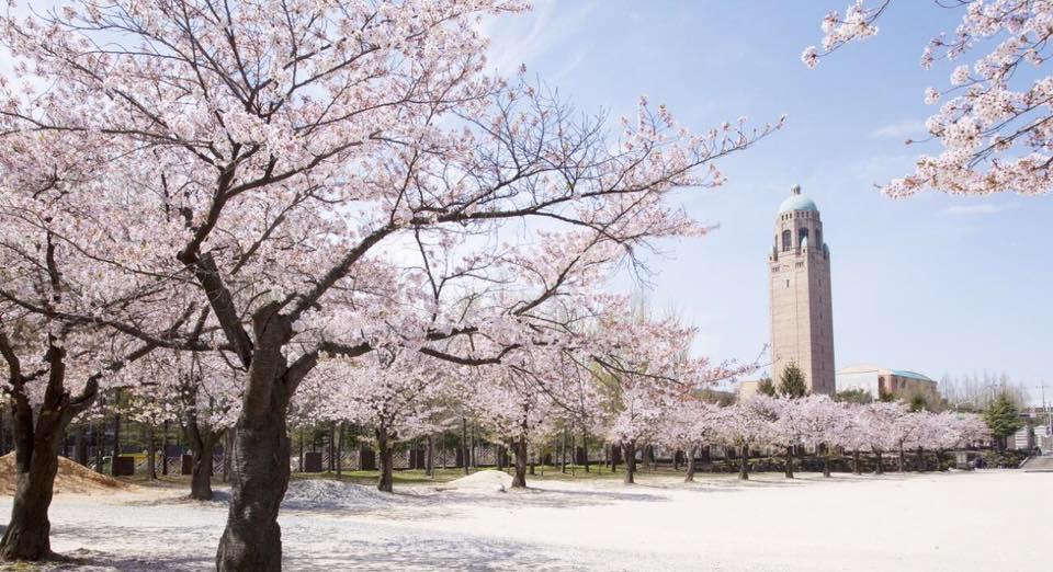 Cao đẳng Khoa học Kỹ thuật Daejeon